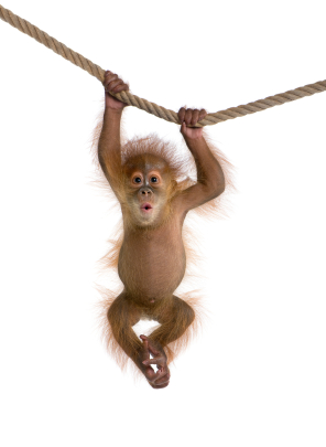 monkey_hanging_out.jpg