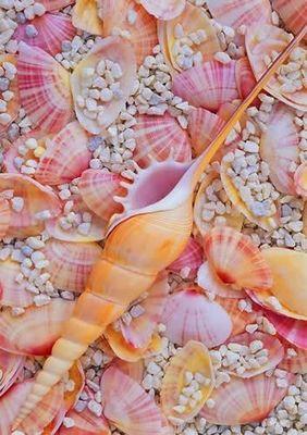 pinksea.jpg