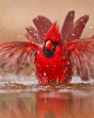 cardinalbath.jpg